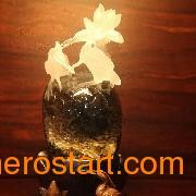 特色的水晶哪里买:中国花开富贵