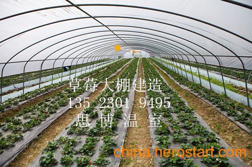 供应山西蔬菜大棚钢管市场建设价格
