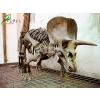 供应恐龙骨架标本 恐龙化石 电影道具