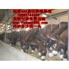 供应利木赞牛小种牛价格多少钱啊