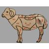 供应专供冷冻羊腿肉羊净肚羊棒骨羊头羊鞭
