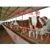供应成年西门塔尔牛母牛多少钱一头