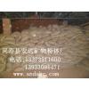 供应安达矿业直销孵化蛭石1-3mm