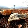 荆门提供可信赖的园林绿化工程 钟祥园林绿化工程案例