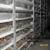 广州芳村做个茶叶保鲜冷库,银雪制冷供应可信的茶叶保鲜库安装设计