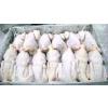供应冷冻白条鸡