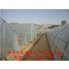 供应简易塑料大棚温室种植蔬菜大棚的建造