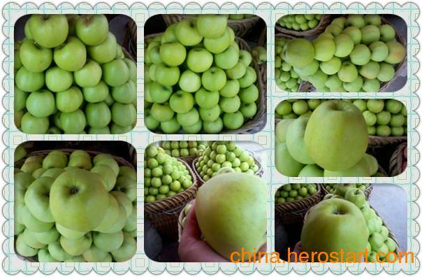 供应批发青苹果早熟苹果云南昭通苹果新鲜水果
