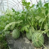 订做农用地膜|山东农用地膜||浙江农用地膜|台州农用地膜