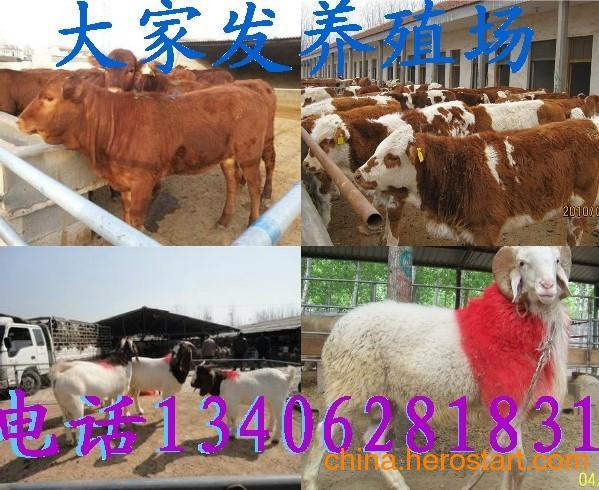 东北驴肉价格肉牛的