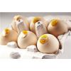 供应绿色生态蛋,农作物喂养土鸡蛋,品牌土鸡蛋