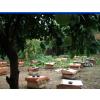供应蜂群箱蜂笼蜂中蜂种蜂群蜂具巢础巢脾摇蜜机蜂箱