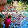 金华别墅景观鱼池水净化水循环值得信赖