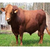 【首选】山东肉牛/山东肉牛养殖品种/山东肉牛养殖哪家好