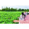 供应生态观光农业 新型生态旅游业 现代农业  观光休闲农业