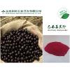 供应巴西莓粉