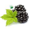供应优质黑莓果粉