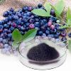 供应越橘花青素 蓝莓提取物 山桑子提取物