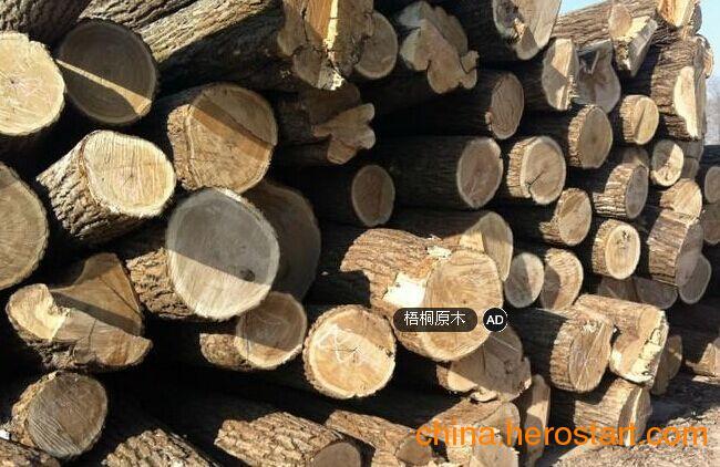 供应国内梧桐木原木