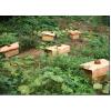 供应萍乡万载岳阳临湘长沙湖南中蜂养殖场笼蜂养蜂场原装现货