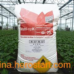 供应好肥料以色列海法瑞宝 安信种苗热销中