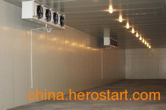 供应滁州建设蔬菜冷库就找金雪