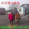 供应湖北武汉赛马场,伊犁马,蒙古马,阿拉伯马,纯血马,小矮马
