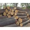 供应批发国内榆木原木各种规格齐全