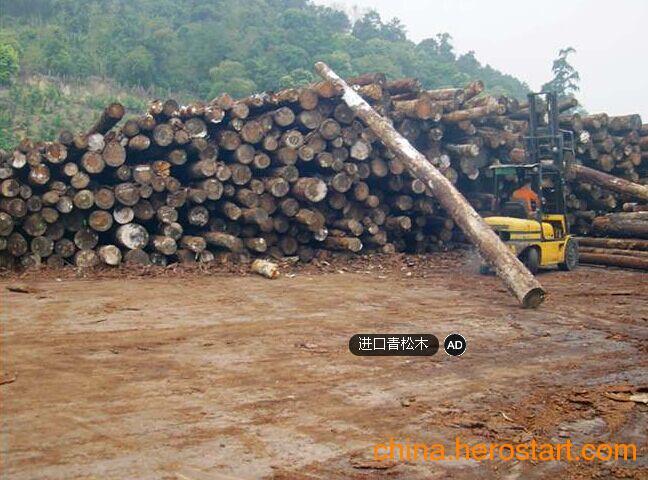 供应国内青松原木各种规格齐全