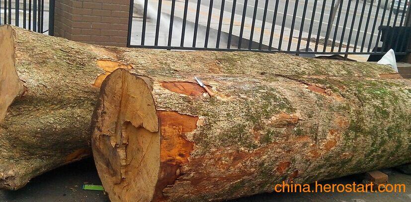 供应四川金丝楠木原木 各种规格齐全