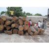 供应非洲花梨原木各种规格齐全