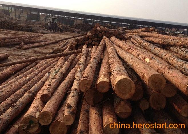 供应批发非洲紫檀木原木各种规格齐全