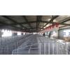 供应厂家直销养猪设备自动化料线 自动料线 自动化运输系统 自动化养猪设备价格