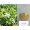 供应厂家直供金银花提取物绿原酸