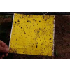 供应供兰州力速达粘虫板和甘肃粘虫板
