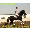 供应哪里有卖马的.哪里有养马场.骑乘马价格.中国大型养马场