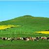 到普吉岛旅游多少钱|河南服务周到的郑州到普吉岛旅游团行程公司