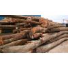 供应珍贵的木材