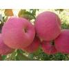 供应苹果苗红富士苹果苗/短枝苹果苗,3-8公分核桃树带土急售