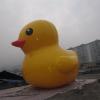 供应广东厂家专业订做充气模型 PVC大鸭子 3米大黄鸭