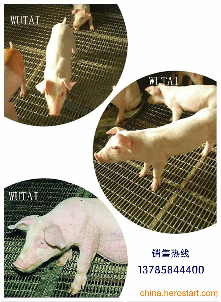 供应正规的养猪网还是选择五泰丝网