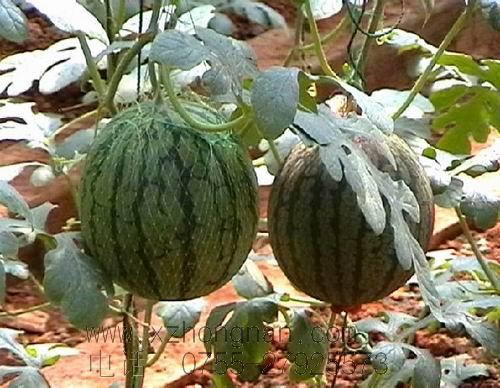 供应,西瓜网袋,水果网袋