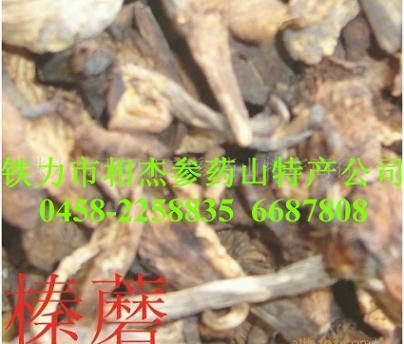供应野生榛蘑
