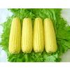 供应双色蜜脆 超甜可生食水果玉米