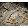 供应蝎子养殖