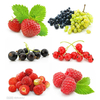 供应蔓越莓批发价格 蔓越莓批发价格  购蔓越
