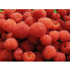 供应树莓果干 生产厂家  树莓果干 价格优惠