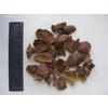 供应石榴皮提取物-鞣花酸