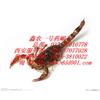 供应金头蜈蚣,药蝎王