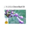 供应丁香花蕾油